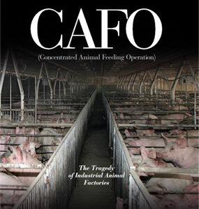 Animales de granjas industriales CAFO